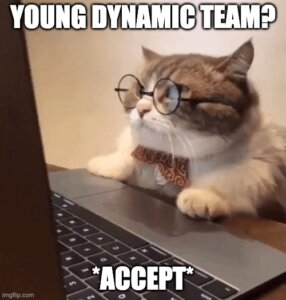 Meme with a smart-looking cat, which accepts IT job offer based on a